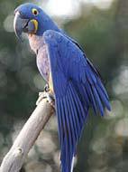 bird-p14